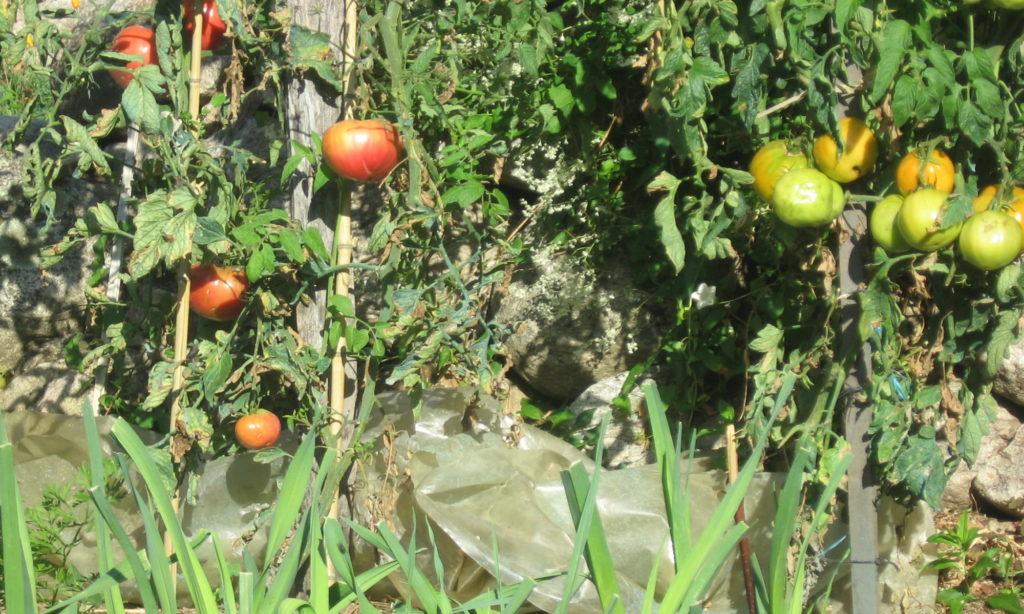 Potager du du gîte A la lisère - Ardèche