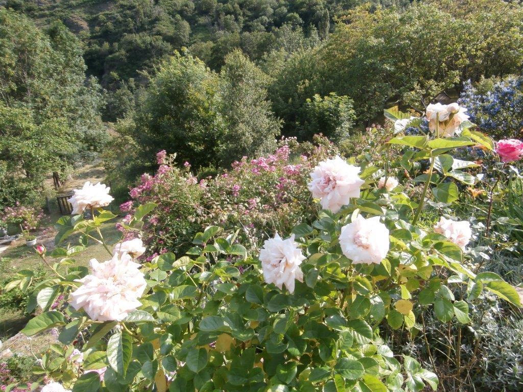 Jardin du du gîte A la lisère - Ardèche