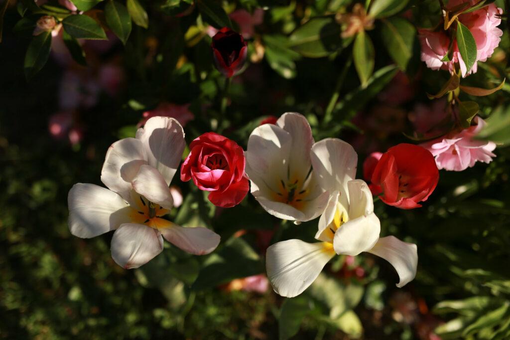 Fleurs du jardin du gîte A la lisère - Ardèche